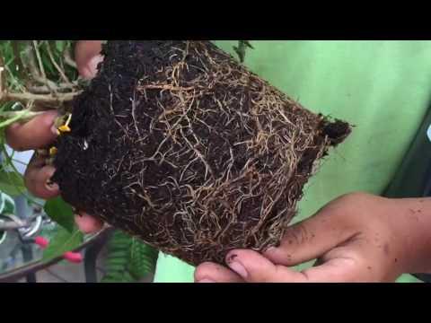Garden Tip: Planting Roots