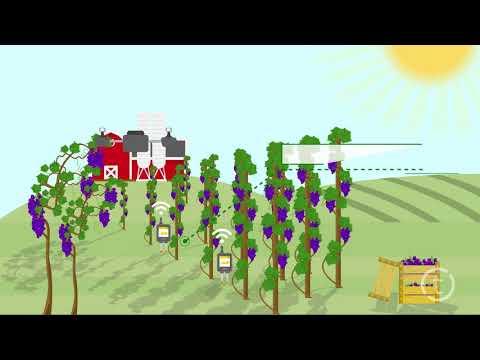 .一年千億的產值:農業物聯網,你瞭解多少?