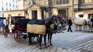 Экскурсии в Вене www.austriadeluxe.at(, 2013-03-03T18:32:44.000Z)