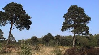 Peatlands Park, Dungannon, County Tyrone.