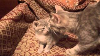 Котята проснулись утром 2015-11-03