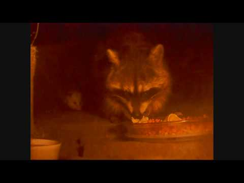 Midnight Animal Diner  -  Spring Feeding