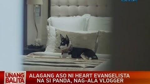 UB: Alagang aso ni Heart Evangelista na si Panda, nag-ala vlogger