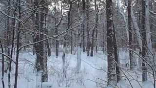 Relaxing nature scenes & chinese instrumental music - In The Forest In Winter Season VIII