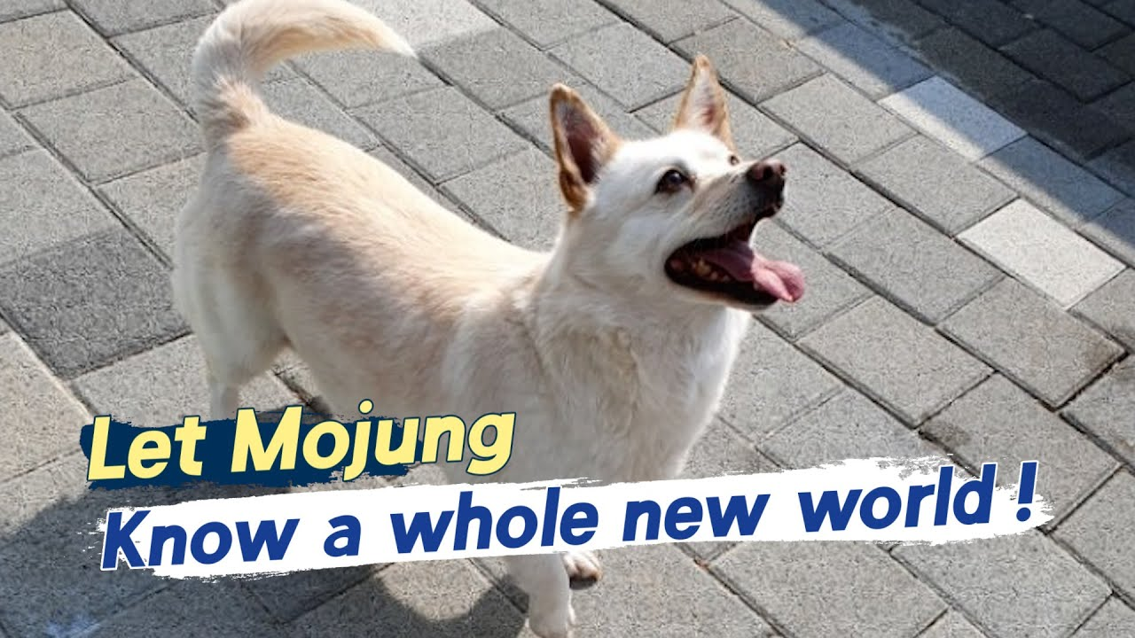 Let Mojung Know a whole new world!