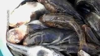 Морская рыбалка в Одессе - Днестровская банка - Иволга