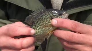 Рыбалка по последнему льду. О рыбалке всерьёз. Выпуск 204