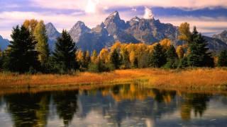 Рыжий лес обои осенний пейзаж