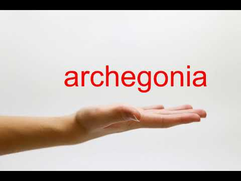 How to Pronounce archegonia - American English