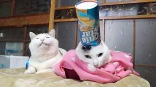 のせ猫 x チップスター ChipStar