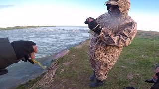 Рыбалка в Кургальджино. Попали на раздачу окуня, щуки и судака. Бешенный клев