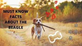 Getting To Know Your Dog's Breed: Beagle Edition