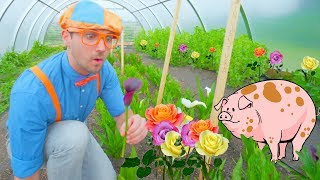 Blippi Farm Tour | Farm Animals and Vegetables for Kids