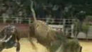touro bandido x Dodge ram