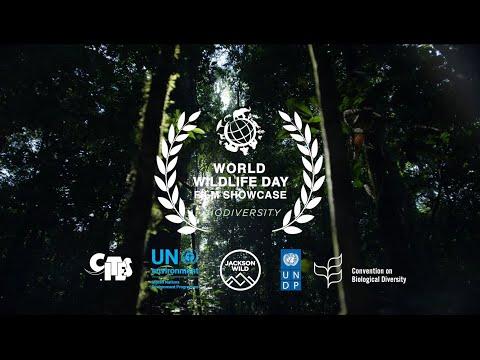 Winning Films Of World Wildlife Day 2020 Film Showcase