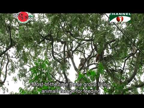 Nature and Life   Episode 146 (Lawachara National Park)