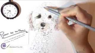 Realistic Drawing Of Toy Poodle - Peanut