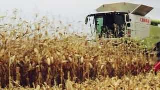 Один з найбільших українських виробників кукурудзи вибрав комбайни CLAAS