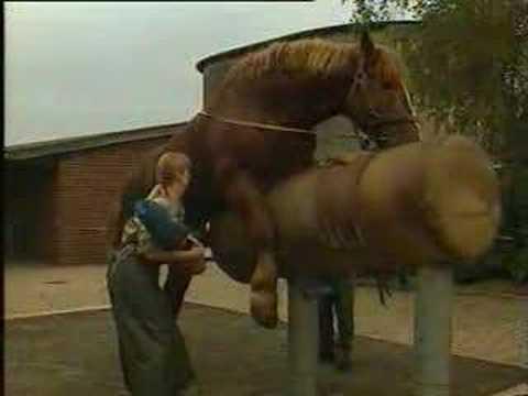 stallion semen collection secondKaynak: YouTube · Süre: 1 dakika31 saniye