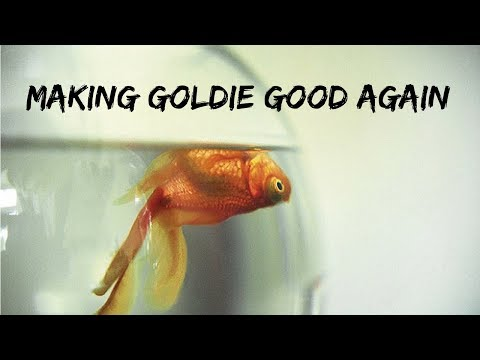 (WARNING) Swim Bladder & Oranda Goldfish Wen Trimming Surgeries | How To Perform Fish Operations DIY