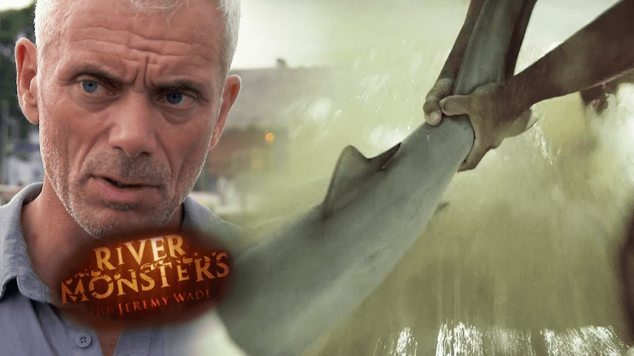 8-Year-Old Attacked By Bull Shark In Florida | HORROR STORY | River Monsters