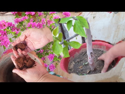 BIG SOIL MISTAKES that Most Gardeners Make || Common Gardening Mistakes that Beginners Make
