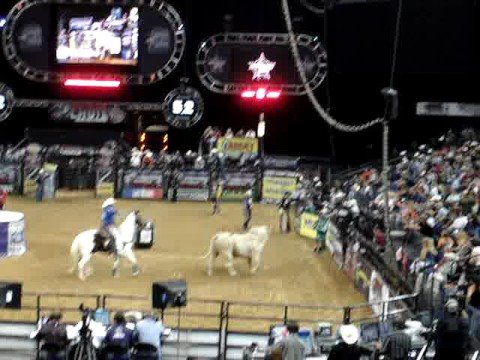 Rodeo in Oakland - Wild Bull Gets Away