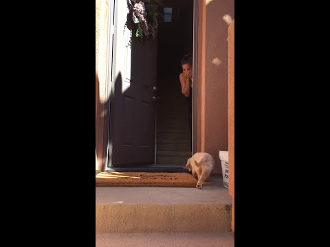 Surprise Golden Retriever Puppy