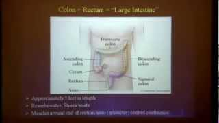 What's Involved with Colon Cancer Surgery?