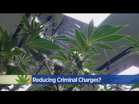 Proposition 64: Marijuana Changes Will Have Big Impact On Certain Pot Charges