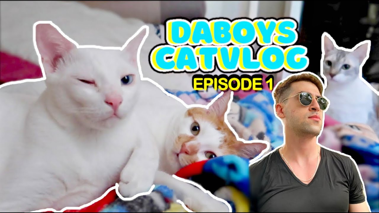 CONDO Life + Moving to a New House SOON 🏡 | DaBoys CatVlog