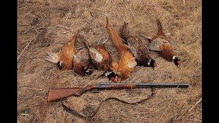 Охота на фазана с дратхааром.