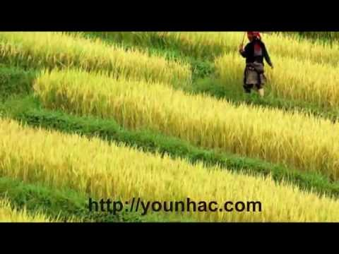 Muc Anh Trang Vang - Cam Ly & Quoc Dai