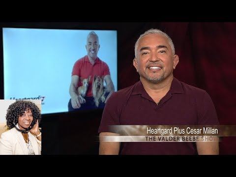 Cesar Millan Talks Heartgard Plus To Safeguard Dogs