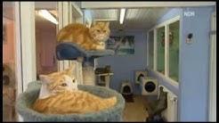 Beitrag im Schleswig-Holstein Magazin zum Katzenparadies 2012