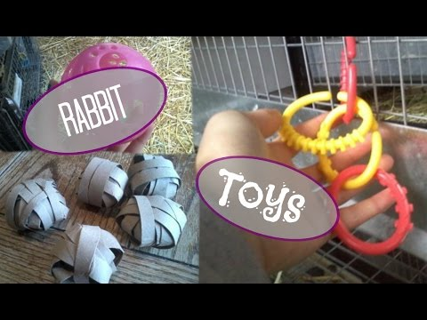 Rabbit Toys | What Toys are Good for Rabbits? | Rabbit Toy Ideas