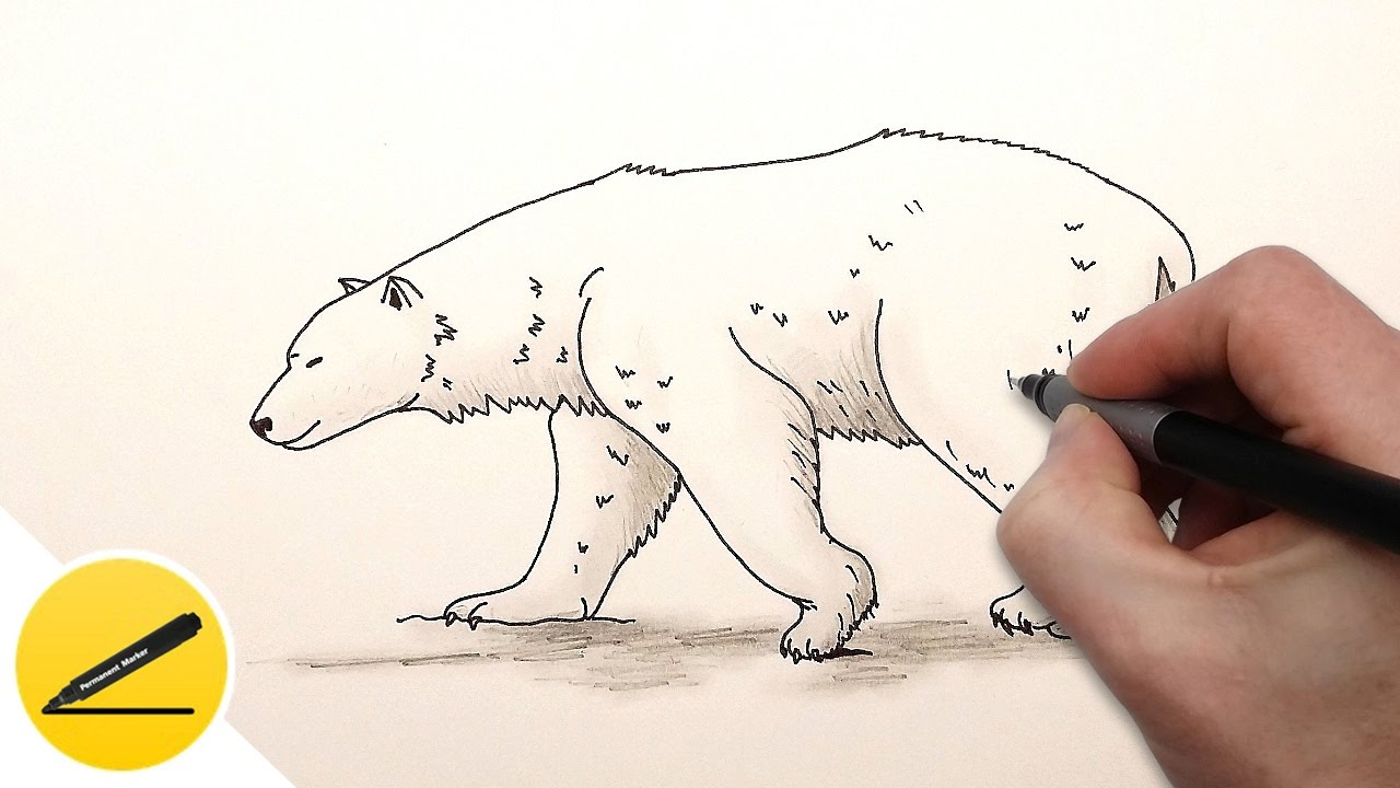 How To Draw A Polar Bear Step By Step For Kids Draw Ice Bear Youtube