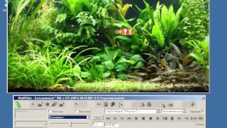 Урок 31 Аквариум с 3D рыбками в BluffTitler