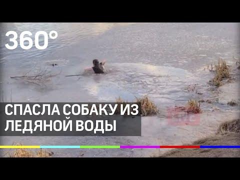 Врач из Мытищ нырнула за собакой в ледяную воду. Видео