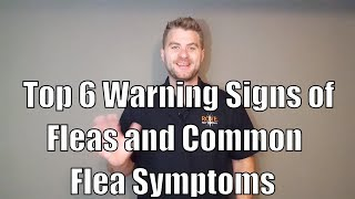 Top 6 Warning Signs of Fleas and Common Flea Symptoms