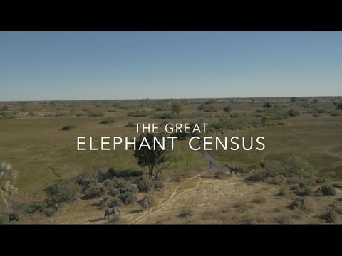 Great Elephant Census: Counting Africa