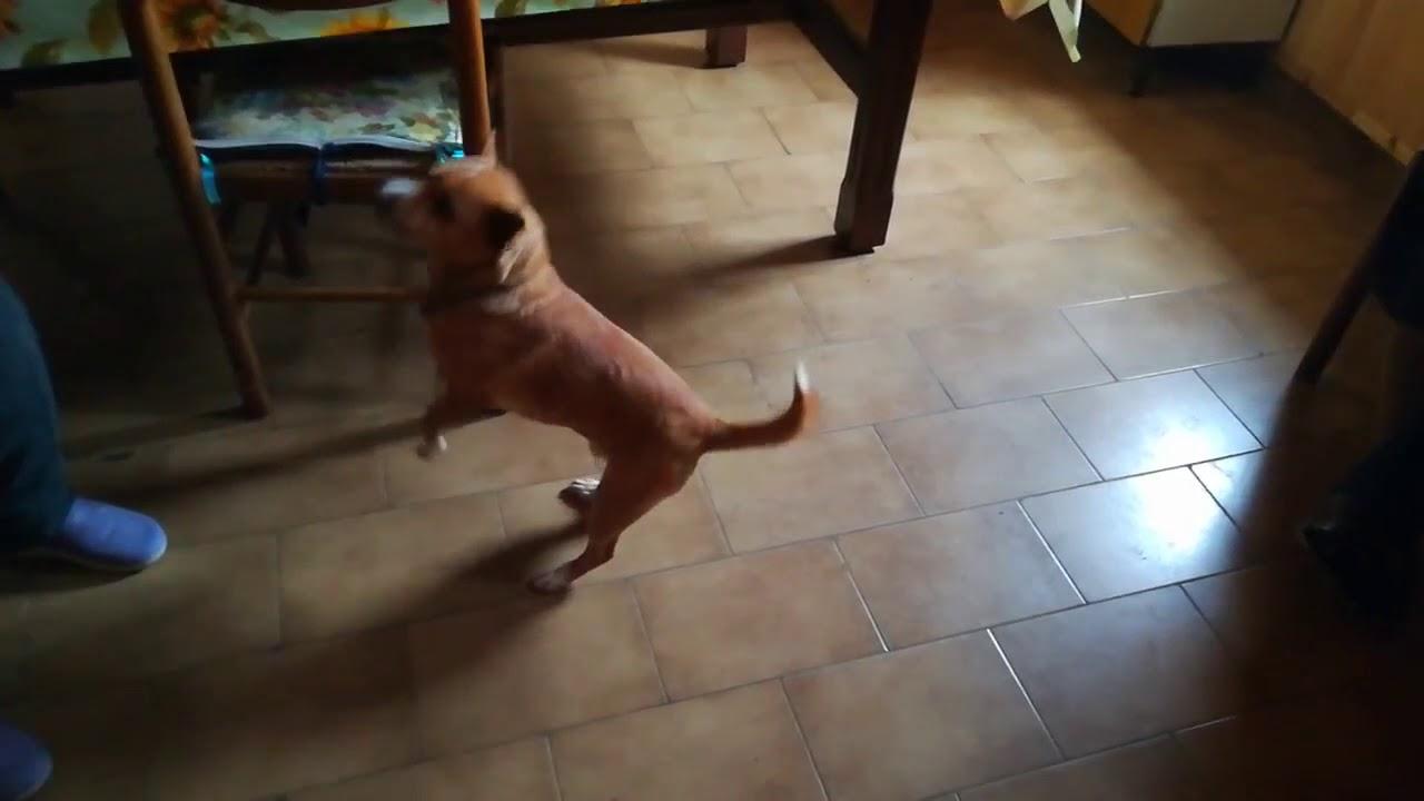 Do un calcio al mio cane