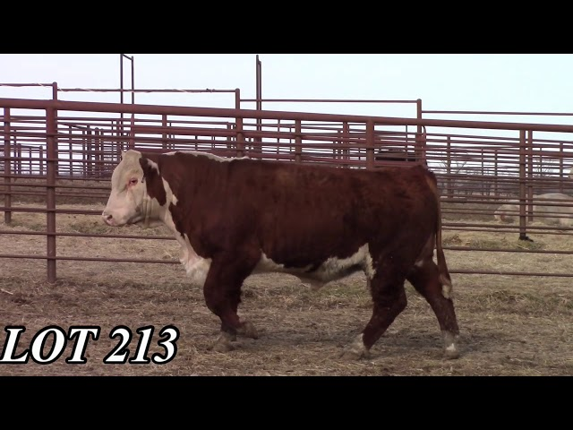 Mead Angus Farms Lot 213