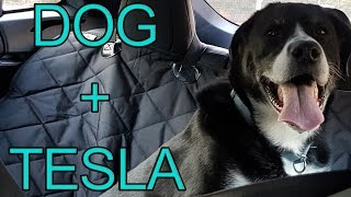 Ender's First Ride in the Tesla   Testing 4Knines Dog Seat Cover