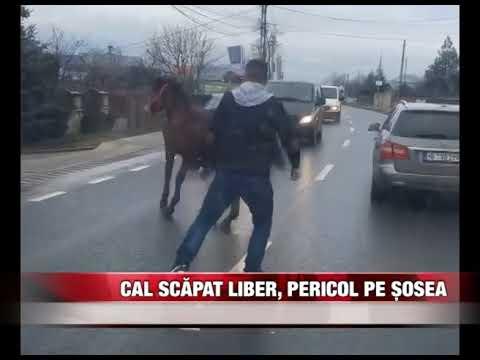 Cal scăpat liber, pericol pe șosea