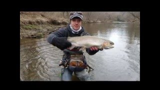 MONSTER Rainbow Trout Caught out of Stream Barely Fits in My Net! | RifflesandRuns