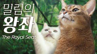고양이 밀림의 왕좌! 과연 왕은 누규?!!! (캣타워를…