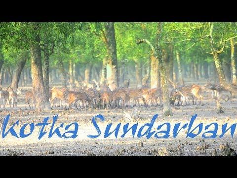Kotka Sundarban Bangladesh। Kotka Sundarban। Kotka । Mangrove Forest। Sundarban Tour