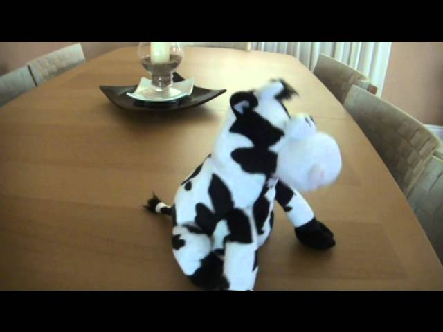 Happy Cow Travel Video