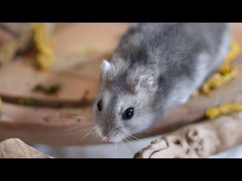 Ammonia Explores His New Home